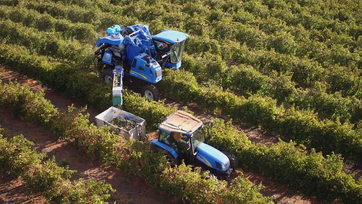 Weilong Harvesting